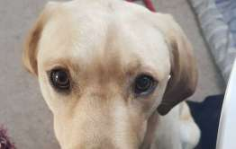 dog fostering scheme in East Anglia
